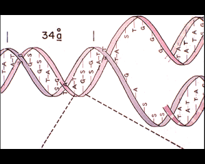 Image from the Golden Record on Voyager 1 - the structure of DNA.